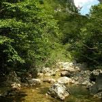 Habitat van ringslang, gewone pad en vuursalamander in Kroatië.