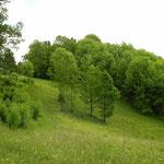 Habitat van o.a. levendbarende hagedis.