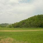 Habitat van levendbarende hagedis
