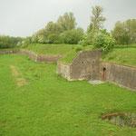 Habitat van muurhagedis, hazelworm en vroedmeesterpad.