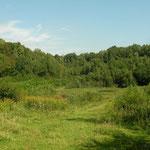 Habitat van levendbarende hagedis en geelbuikvuurpad.