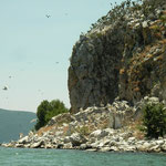 Aankomst bij Golem Grad, de oevers zitten vol met aalscholvers, pelikanen en reigers.