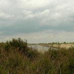 Habitat van heikikker, levendbarende hagedis en adder in Twente.