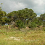 Mediterranean Chameleon habitat