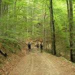 Op weg, door het bos...