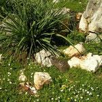 Basking Spur-thighed Tortoise (Testudo graeca)