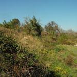 Habitat van boomkikker op Samos.