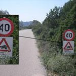 Om de zoveel meter kroop er een landschildpadje de weg over.