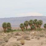 Palm oasis along Lake Mead, home to lots of life in the desert.