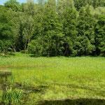 Habitat van o.a. kamsalamander en boomkikker