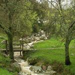 Vuursalamander habitat
