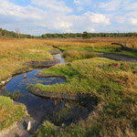 Fast landscape comprising of heathland and artifical ponds providing habitat for many species.