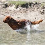 Aspen im Wasser