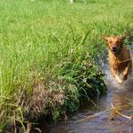 Wassertreten ist ja so gesund!