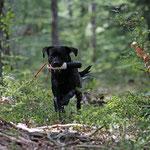 Was die im Wald alles verstecken!