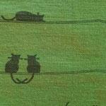 Katzen grün