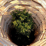 the tree within Adlerhorst