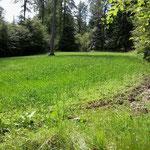 Jagd-Club Bad Nauheim e.V. - Wildruhezonen mit Äsungsflächen, angelegt 2012 bis 2014