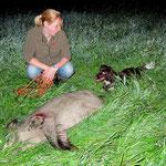 Foto Jagd-Club Bad Nauheim e.V. Nr. 1417 - Der junge Jagdhund hat erfolgreich nachgesucht