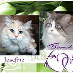 Josefine & Bismark