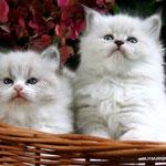 Fata Morgana & Fiona