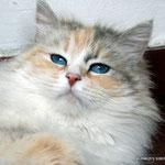 Madre: Ch.Josefine von Shigansk of Murmur SIB g 03 21 33