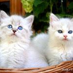 Isildur & Irina