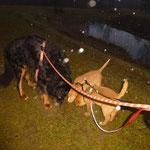 Mit Rudi an der Leine im Regen