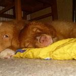 Chilling unter dem Küchentisch, gerne an den Füßen!