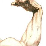 Starker Arm (Ausschnitt) / Buntstift auf Zeichenkarton