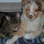 Kimba und Rocco