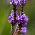 San Anton Garden_MG_1418