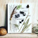 2018年10月 表参道&飯田1dayレッスン 『植物標本〈キャンバス〉』作り