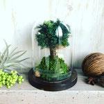 2018年1月 表参道&飯田1dayレッスン 『シンボルツリーを作るドーム型テラリウム』