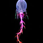 Monoflagellate #1