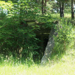 Bunker in the forest