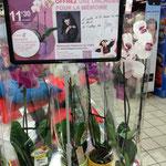 """""""Une Orchidée pour la mémoire"""" au E.Leclerc de Landerneau (29)"""