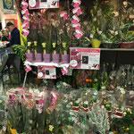 """""""Une Orchidée pour la mémoire"""" au E.Leclerc de Riantec (56)"""
