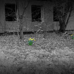 Even flowers sprout among the decay - Albuhera Barracks - B.A.O.R Werl
