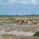 balade a cheval sur des Hensons