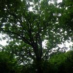 空を覆う枝の広がり