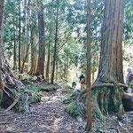 樹齢約300年の木曽檜を見ながら進みます