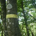 13. 千石山への下りの地図読みは慎重に。黄テープを確認。