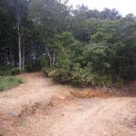 余呉南越前ウィンドファームの林道M[2]