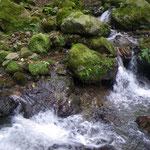 緑の苔と遊ぶ清流