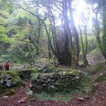 甲森谷の炭焼き窯跡と桂