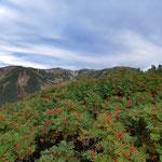 ナナカマドの赤い実と双六岳