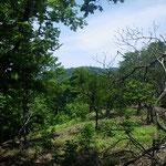 24.遠くに蛇谷ケ峰の反射板。木がなくイワヒメワラビが生えるむき出しの尾根。ここは暑かった。