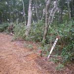 .余呉南越前ウィンドファームブナ林と林道。国有林界杭、