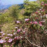 よく咲いている木を発見